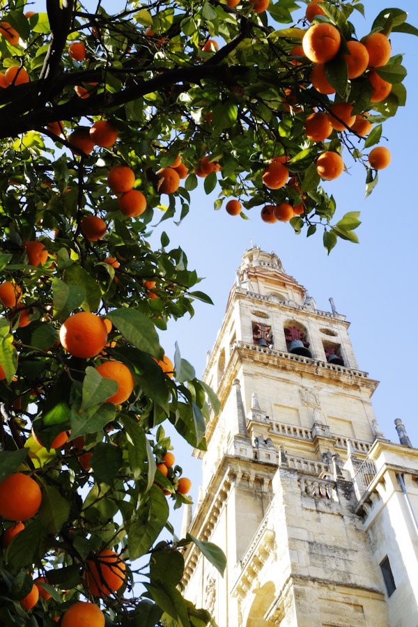 orange-trees-cordoba-1