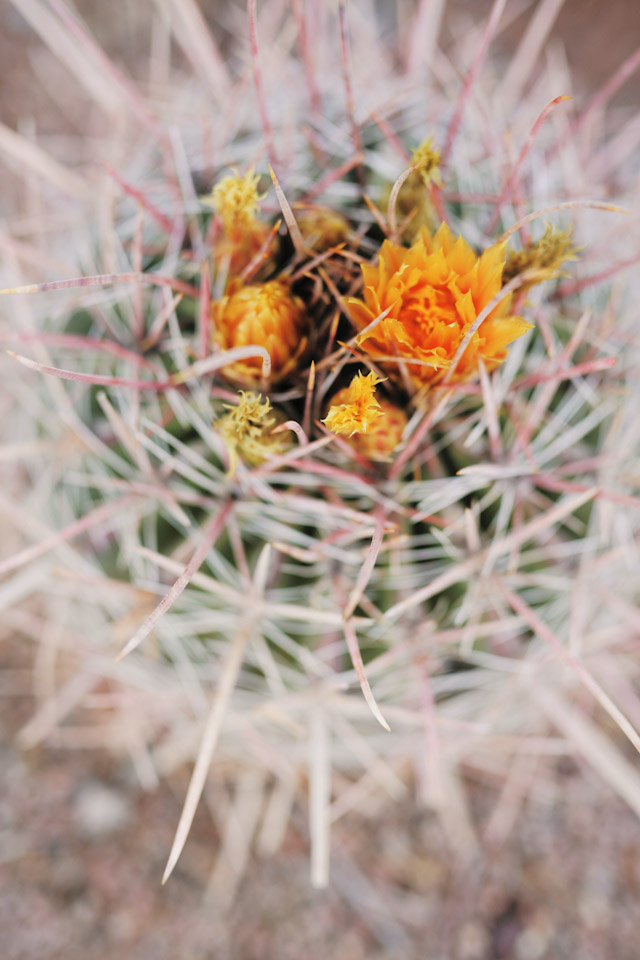 phoenix-botanical-garden-wedding-photographer-0639