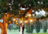 ojai valley inn wedding, ojai valley inn farmhouse, ojai wedding photographer, ojai wedding